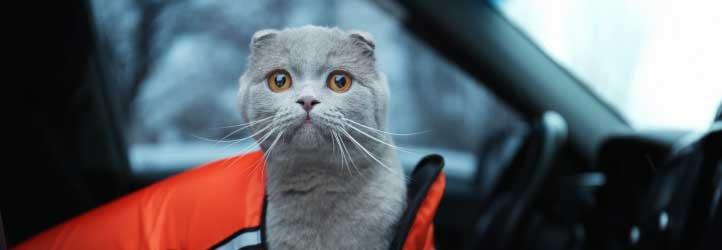 Cách khử mùi hôi của thú cưng trên xe ô tô 9.