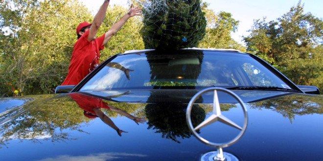Tài xế Anh không biết đến quy định về chở cây thông Noel trên xe ô tô