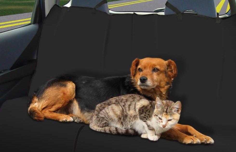 Dùng nệm xe chuyên dụng khi chở thú cưng trên xe.