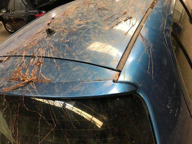 Toyota Yaris mọc đầy rễ cây như trong phim kinh dị 2a