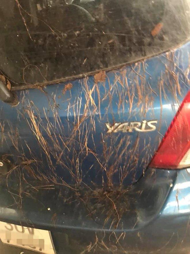 Toyota Yaris mọc đầy rễ cây như trong phim kinh dị 1a