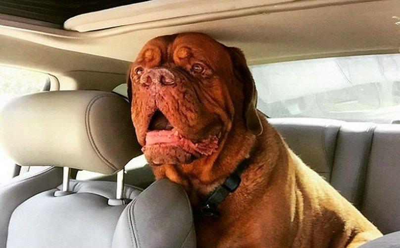 Không để trẻ con hoặc thú cưng trong xe hơi vào những ngày nóng.