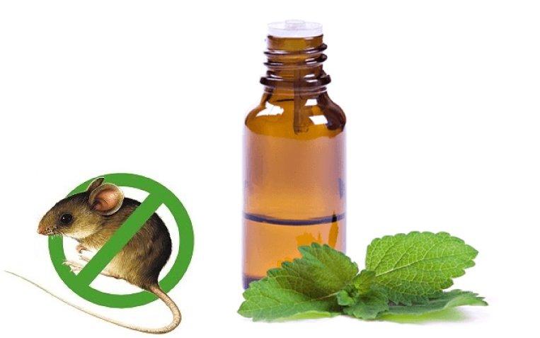 Sử dụng tinh dầu để chống chuột trên xe ô tô.