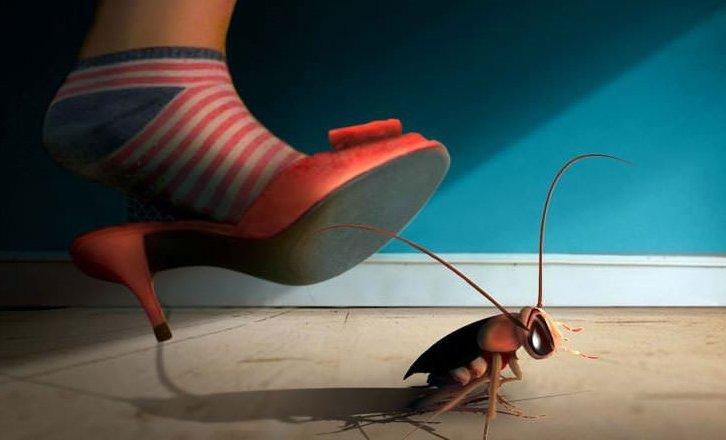 Không dùng giày dép hay chân đập gián.