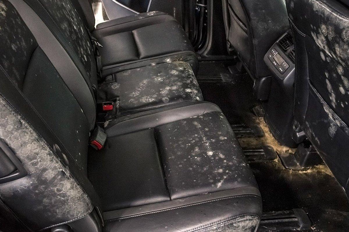 Tình trạng nấm mốc bên trong khi xe để lâu có thể khiến người ngồi bên trong dễ mắc bệnh đường hô hấp hoặc dị ứng.