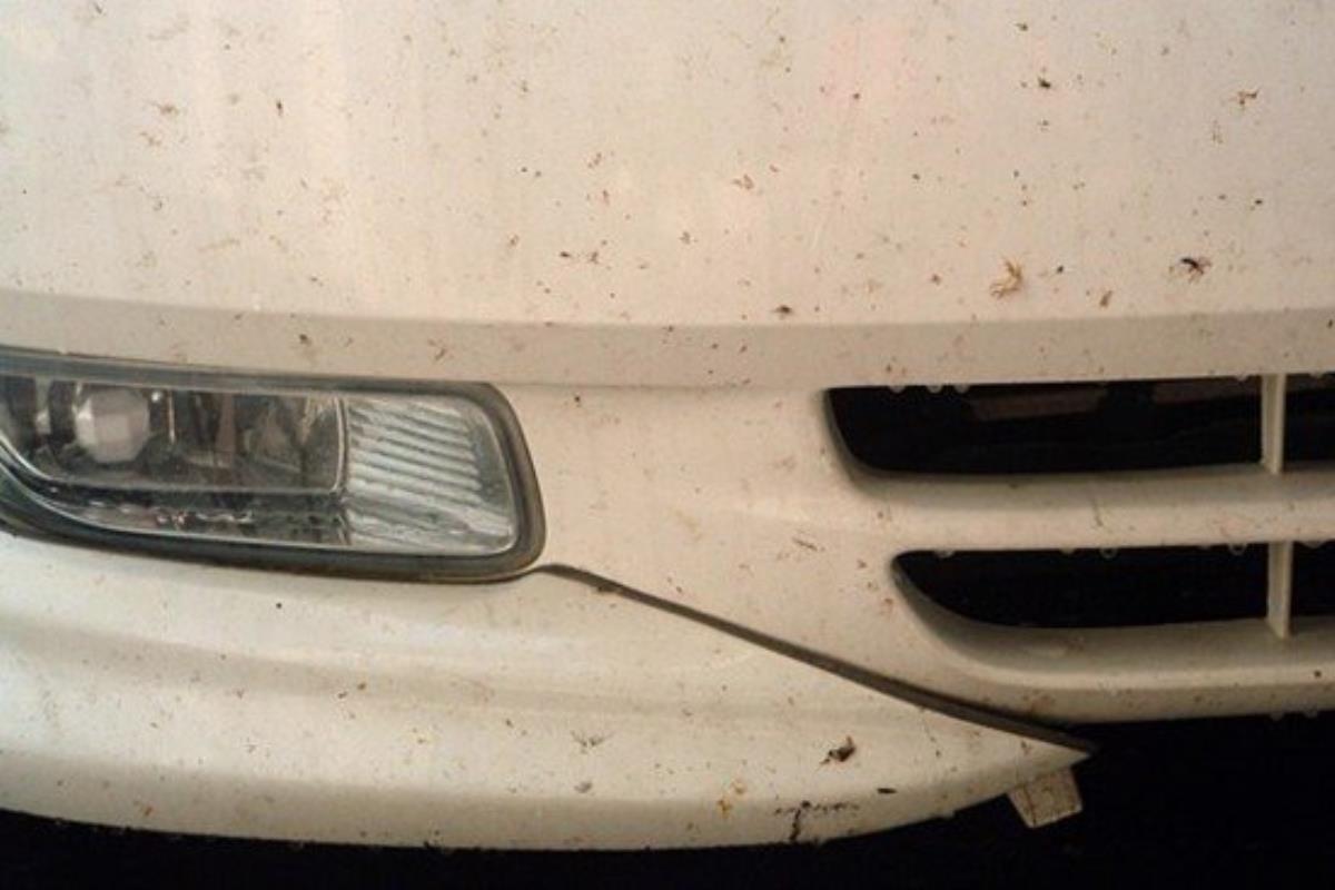 xác côn trùng trên vỏ xe ô tô