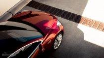 Tesla Model 3 và Model Y sẽ chiếm 50% tổng doanh số xe điện toàn cầu năm 2020