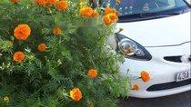 Cần bán lại xe Toyota Aygo đời 2006, màu trắng, nhập khẩu