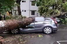Bảo hiểm sẽ thanh toán những thiệt hại của ô tô do siêu giông gây ra