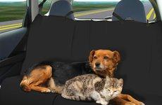Cách khử mùi hôi của thú cưng trên xe ô tô