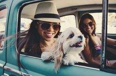 Những điều nên và không nên khi chở thú cưng trên xe ô tô