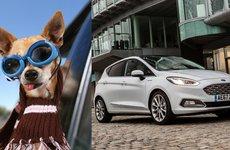 Bảo hiểm ô tô hạng sang cũng chẳng đắt bằng 1 chú chó!