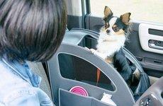 Honda 'chiều lòng' thú cưng bằng trang bị Honda Dog