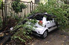 [Ảnh] Hàng loạt ô tô bị cây đè bẹp do bão số 3