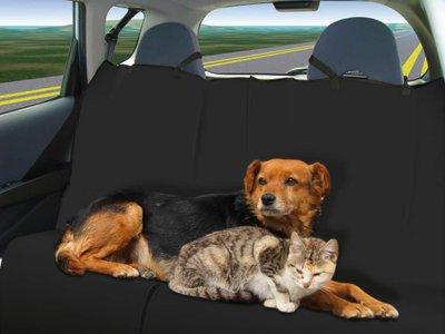 Cách khử mùi hôi của thú cưng trên xe ô tô 2.