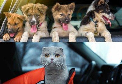 Cách khử mùi hôi của thú cưng trên xe ô tô 1.