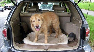 Mẹo bỏ túi cho chủ xe có thú cưng trong những ngày hè nóng nực.