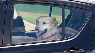 Một con chó ngồi trong xe ô tô