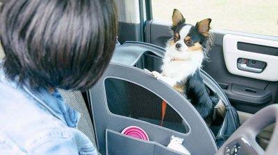 Honda 'chiều lòng' thú cưng bằng trang bị Honda Dog a1