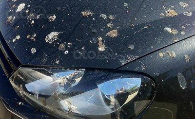 Wax bóng, phủ sáp ô tô: Giảm tác nhân tai hại từ tự nhiên