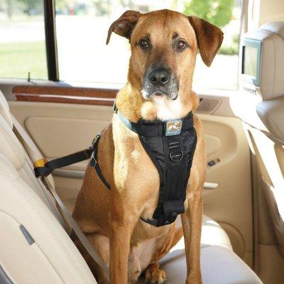 Top phụ kiện ô tô đáng mua nhất dành cho xe chở thú cưng 7