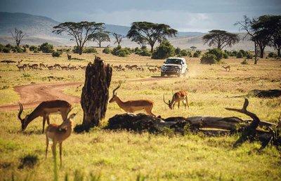 Land Rover Defender 2020 tham gia chương trình thử nghiệm tại Lãnh địa Sư tử Kenya a5