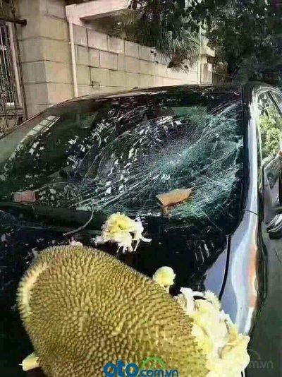 3 mẹo hạ nhiệt ô tô cấp tốc, đối phó cái nóng mùa hè - Đậu xe dưới bóng mát và tai họa khi không để ý