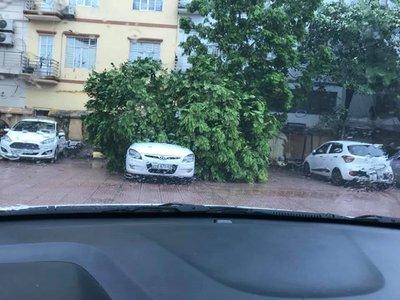 Hàng loạt ô tô bị cây đè bẹp do bão số 3 a8