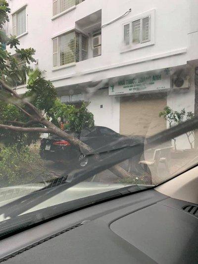 Hàng loạt ô tô bị cây đè bẹp do bão số 3 a2