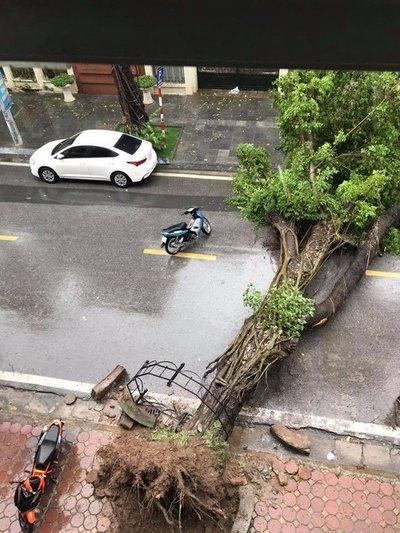 Hàng loạt ô tô bị cây đè bẹp do bão số 3 a1