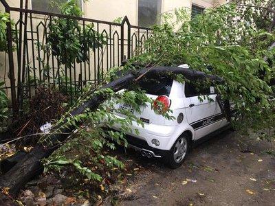 Hàng loạt ô tô bị cây đè bẹp do bão số 3 a3