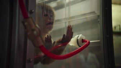 Volkswagen từng sử dụng khỉ