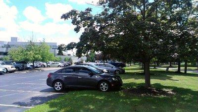 Đỗ xe trong công viên dưới bóng râm và tránh cỏ khô.