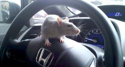 'Chiêu độc' giúp bảo vệ hệ thống dây điện trên ô tô không bị chuột cắn.
