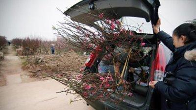 không nên mở cốp khoang hành lý để chở những đồ cồng kềnh như cây cảnh, quất dịp Tết 1