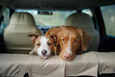 2 chó say xe