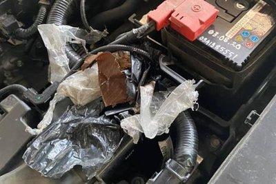 Đuổi chuột bằng dầu gió và long não, cách đơn giản bảo vệ ô tô suốt mùa dịch a2